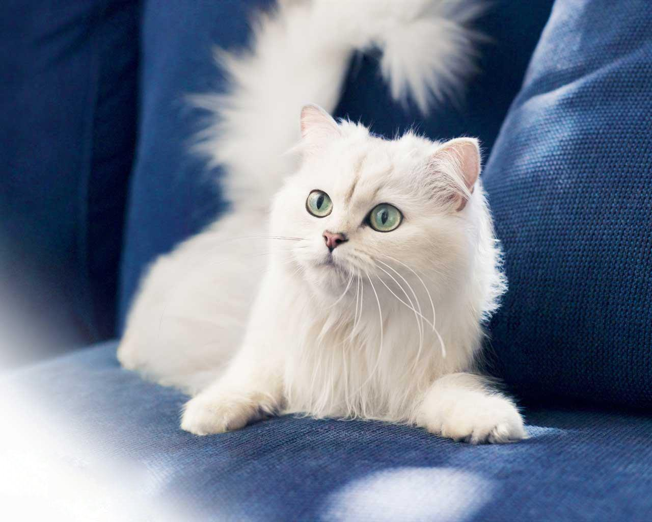 Informacion sobre los gatos